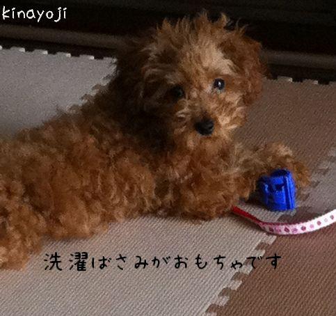 きなこ幼少9