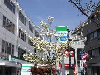 hanamizuki100421
