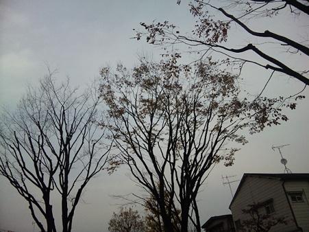keyaki101216