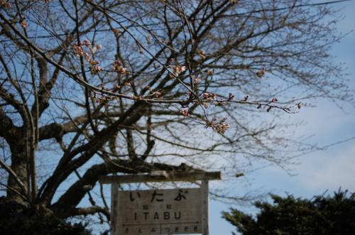 飯給駅 桜のつぼみ 2008/3/30