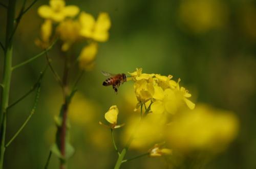 飯給駅のミツバチ
