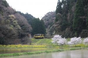 いすみ鉄道 上総東付近 2010/4/3