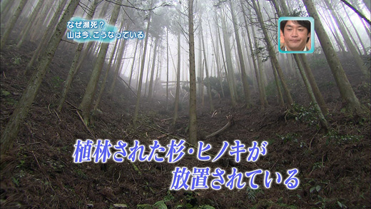 20100429-2.jpg