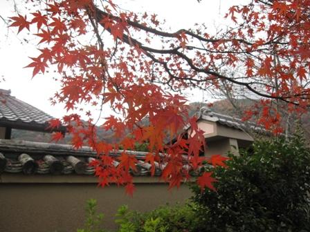 arashiyama (2)