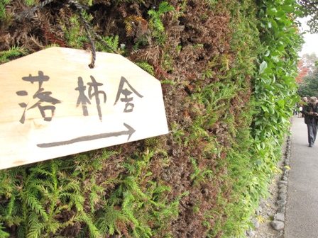 arashiyama (7)