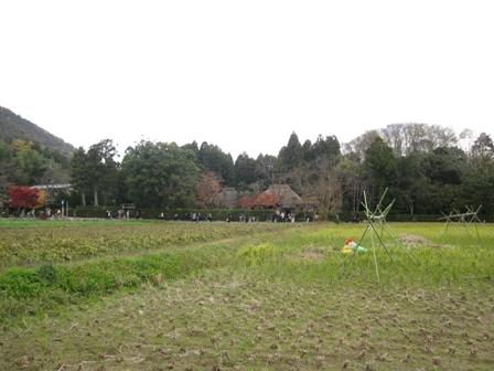 arashiyama (4)