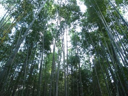 arashiyama (12)