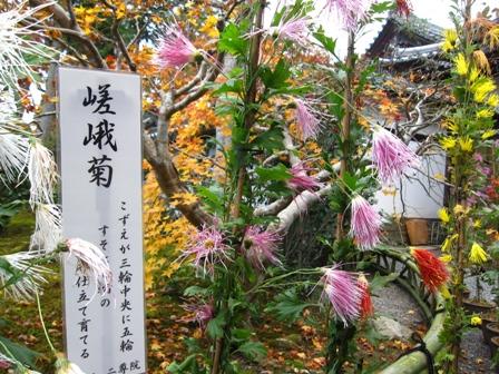 arashiyama (19)