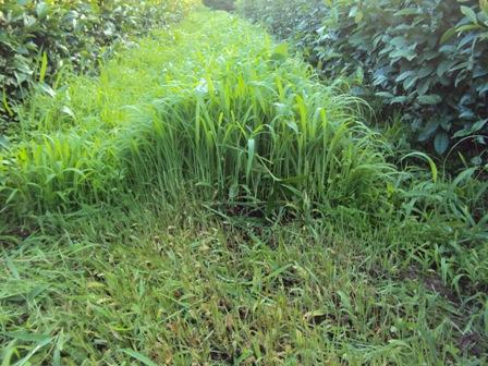 野草のじゅうたん