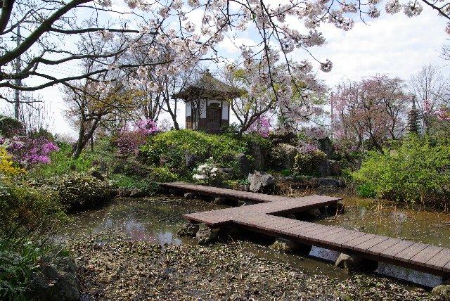 100411桜_常楽寺11