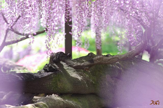 100509須賀の園02