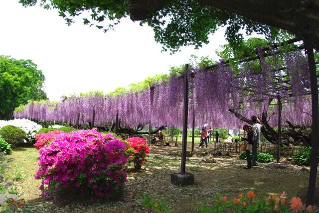 100509須賀の園12
