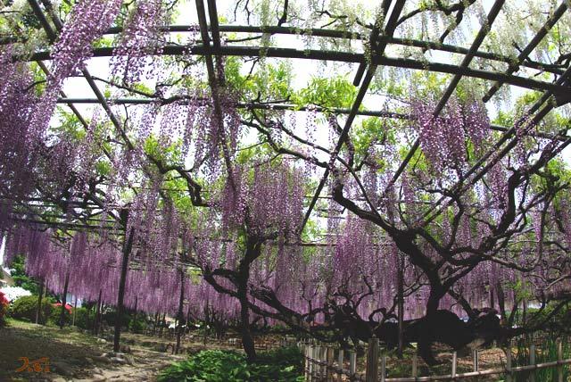 100509須賀の園10