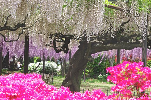100509須賀の園09