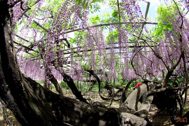 100509須賀の園16