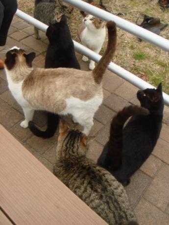 猫がいっぱい!