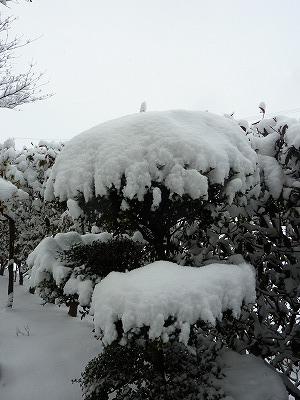 kyuki15.jpg