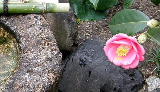 酒心館新酒まつり2012-4