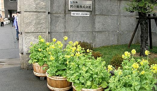 沢の鶴蔵開き2012-1