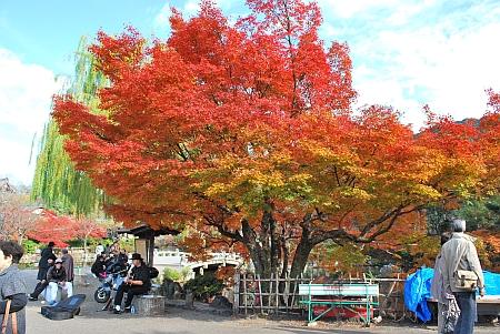円山公園へ抜けます