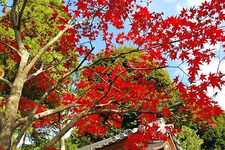 東大谷・大谷祖廟の紅葉