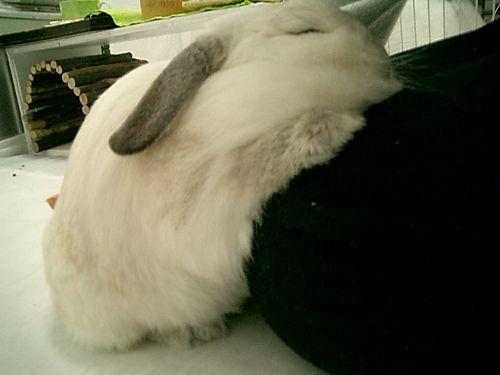 あぷちゃん 寝てる