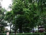 パワーの木