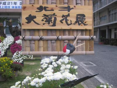 高校の菊花展5