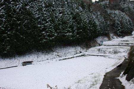 田舎の雪2