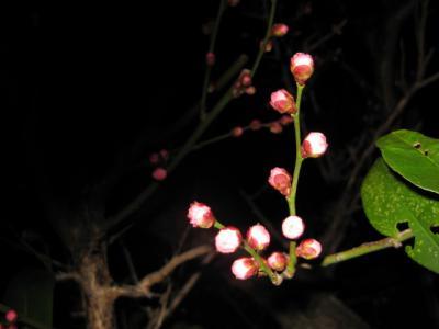 家の周辺の花 048