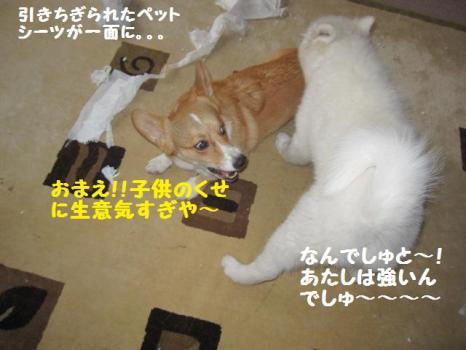 2009 11 21 fukogi1