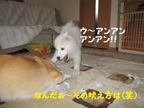 2009 11 21 fukogi3