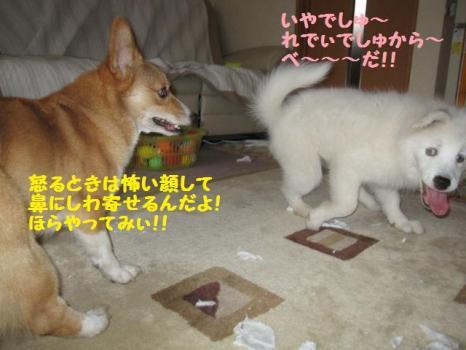 2009 11 21 fukogi4