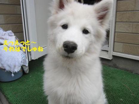 2009 11 27 fuku1