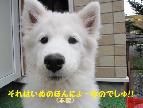 2009 11 27 fuku3