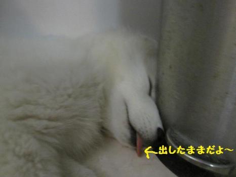 2009 11 27 fuku7