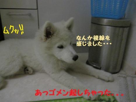 2009 11 27 fuku8