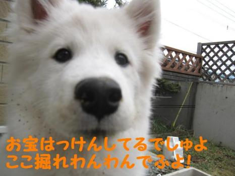 2009 11 27 fuku9