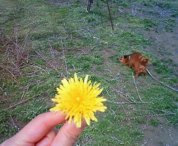 moblog_7ac94905.jpg
