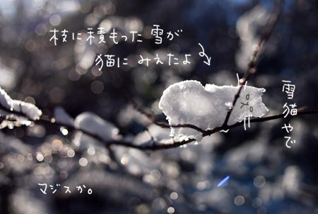 雪猫0102