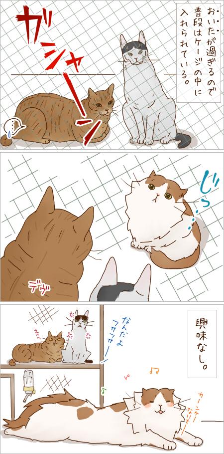 kyoumi02_20110130232043.jpg