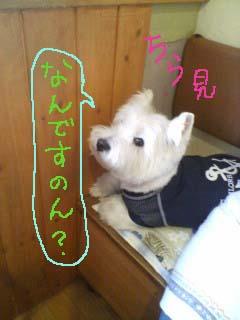 blog20090830200555.jpg