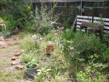 2010 6月の庭