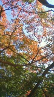 ぼちぼち紅葉