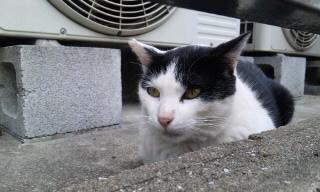 ぷりてぃ野良猫ちゃん