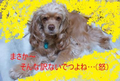 5940-1_convert_20100221203558.jpg