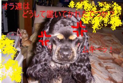 97-2_convert_20100221212457.jpg