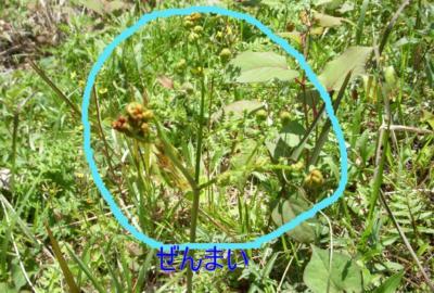 DSCN6764-1_convert_20100421163758.jpg