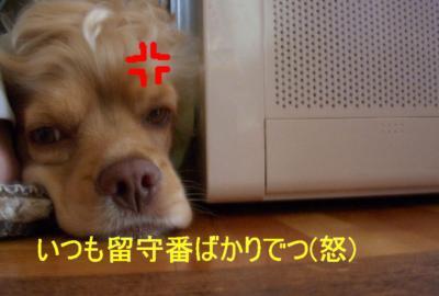 DSCN6799-1_convert_20100422094229.jpg