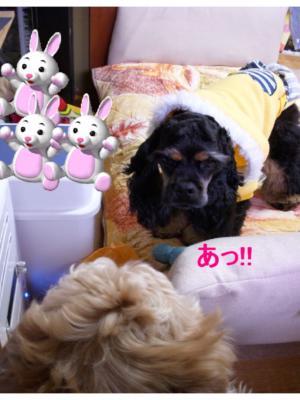 gorohakken_convert_20100131123200.jpg